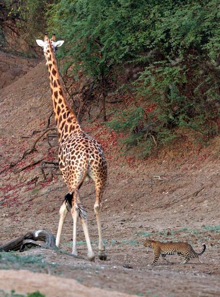 © Michael Lorentz/ African Parks