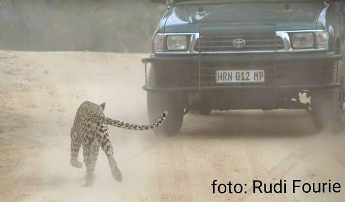 © Rudi Fourie