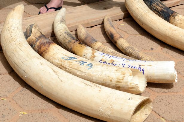 EU banned hunting trophy imports