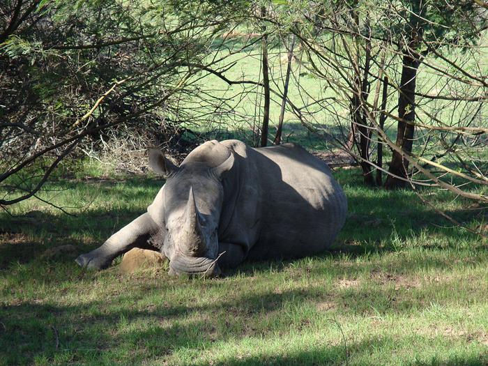 White Rhino, Lalibela Game Reserve