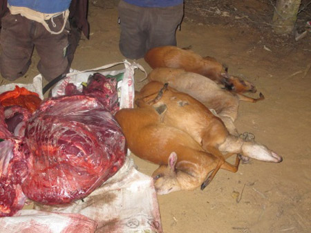 large quantity of meat found by authorities