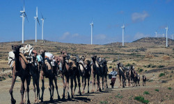 Camels walk along the road near turbines at Ashegoda wind farm in Ethiopia's northern Tigray region. The farm has a capacity of 120MW. © AFP/Getty Images