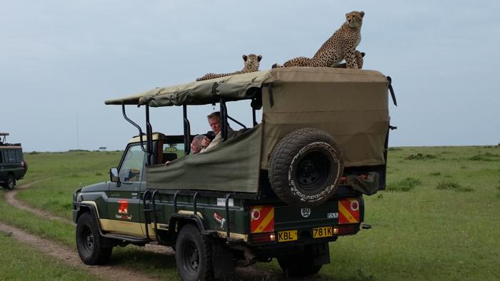 cheetahs mara