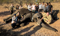 Youth 4 African Wildlife with the last of three collared elephants after a long, successful day.