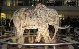 elephant ivory sculpture botswana