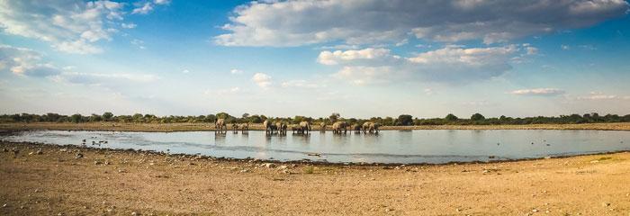elephant-panoramic-etosha