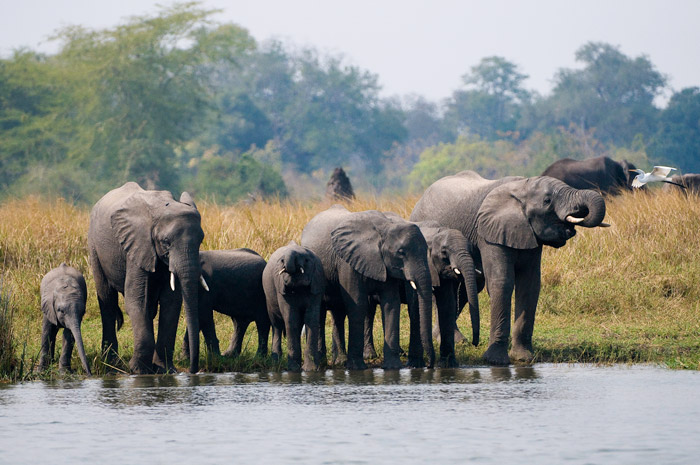 © Central African Wilderness Safaris/ African Parks