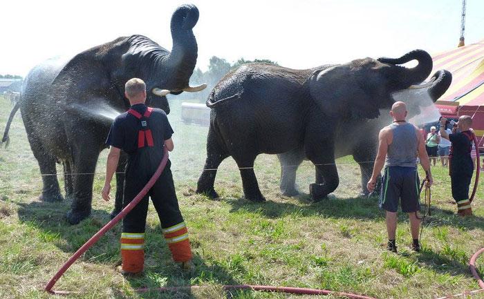 elephants-circus-denmark