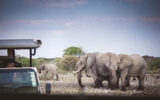 elephants-etosha