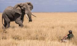 Elephant and photographer