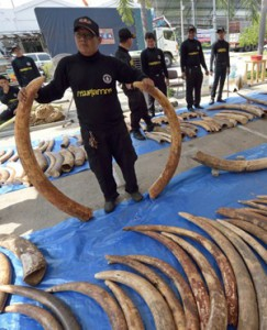 Hong Kong ivory major threat to elephant survival
