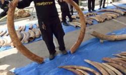 Hong Kong ivory major threat to elephant survival