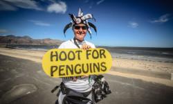 Hoot for penguins