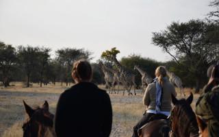 spotting giraffe on horseback