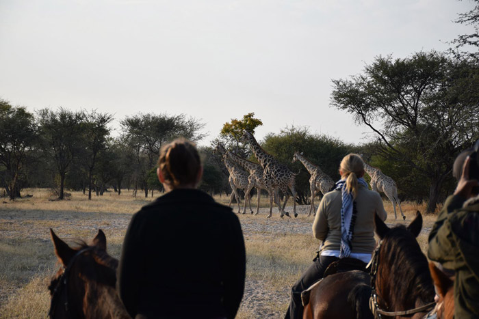 spotting giraffe on horseback