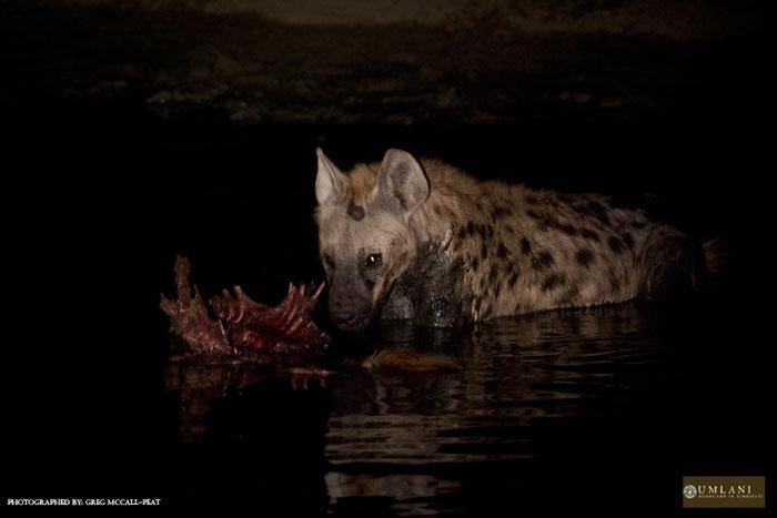 Life of pi hyena scene