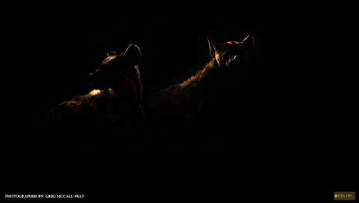 https://africageographic.com/wp-content/uploads/2015/07/hyenas-at-night.jpg