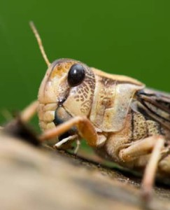DRC turns to insect farming