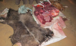 iSimangaliso confiscates skins and carcasses