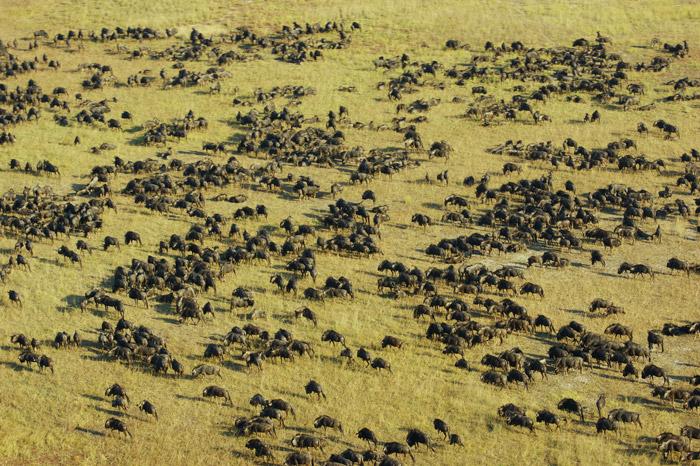 8 Reasons To Visit Liuwa Africa Geographic