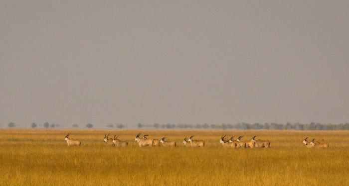 © Norman Carr Safaris