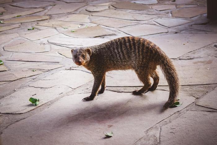 mongoose-mokuti-etosha-lodge