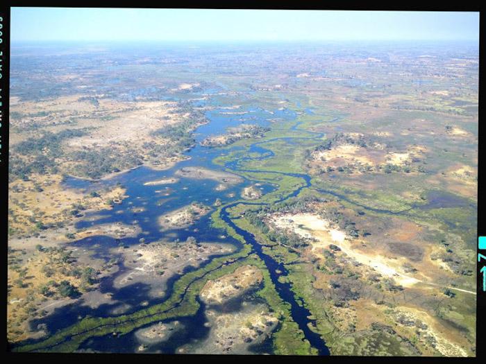 Crocodile nests found in Angola