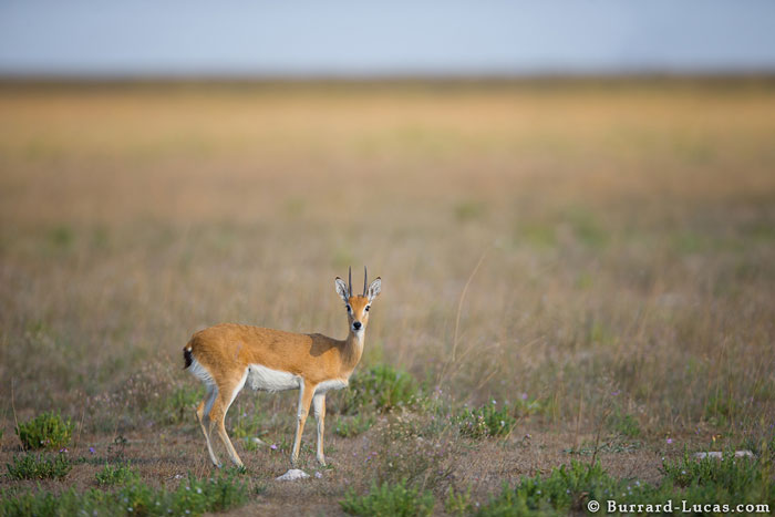 © Will Burrard-Lucas, Norman Carr Safaris