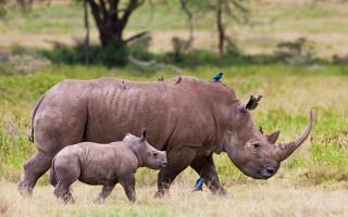 rhino-awards
