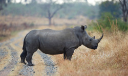 Conservation Action Trust rhino