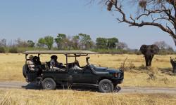 safari-specialists-botswana