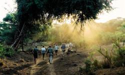 tuli-walking-safari