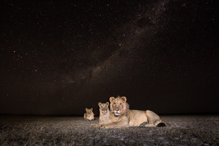 © Will Burrard-Lucas, Norman Carr Safaris