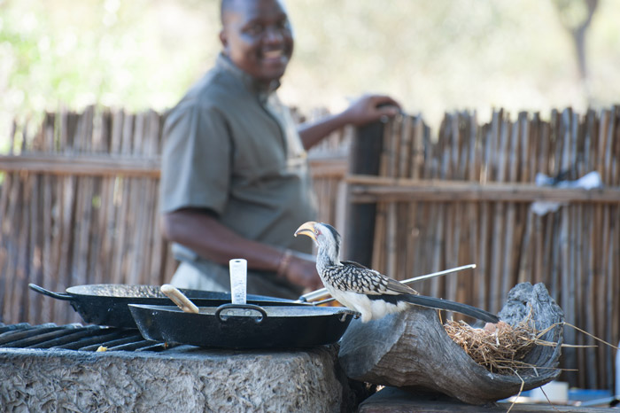 A yellow-billed hornbill joins us for breakfast.  © Sarah Mcgarghan