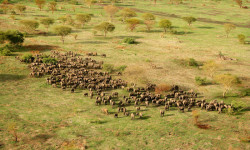 Zakouma's elephants