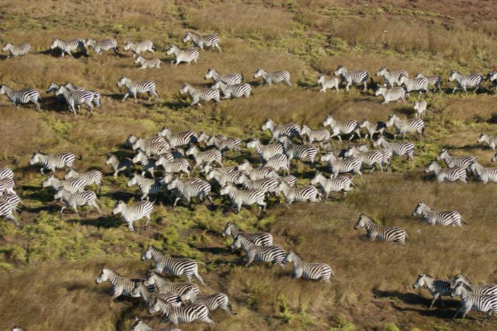 © Peter Fernhead/ African Parks