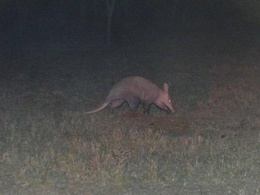 Aardvark-in-Ol-Kinyei