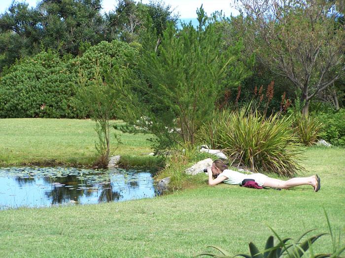 Harold-Porter-Gardens