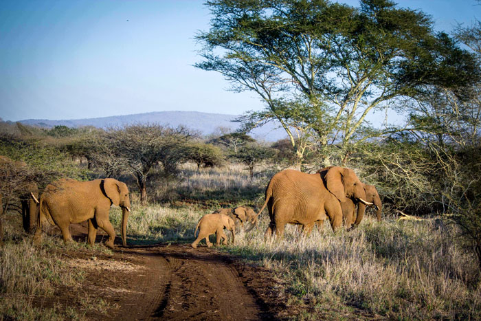 baby-elephant