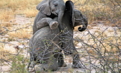 baby-elephants-have-a-great-time