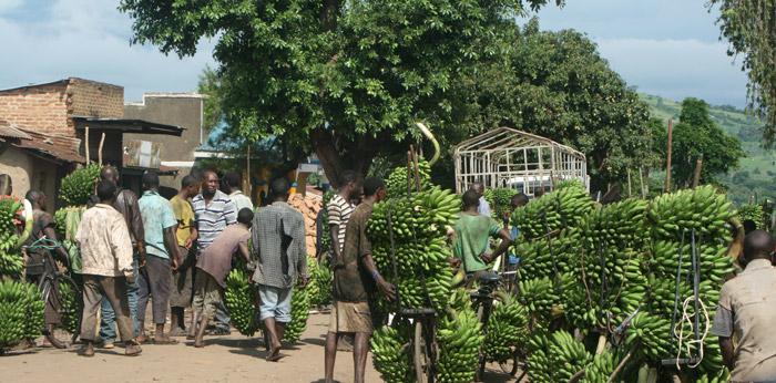 bananas-bicycles