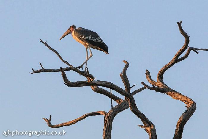 bird-lelobu-safaris