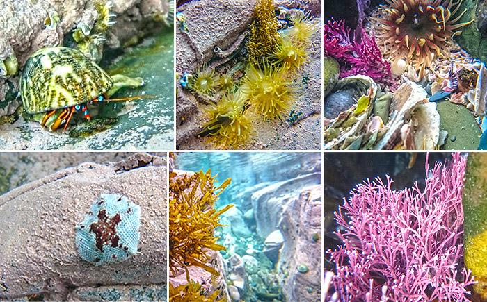 corals-wild-coast