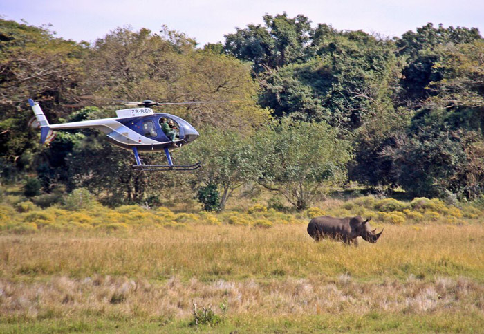 dr-cooper-darting-a-rhino-from-helicopter