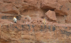 © Sahara Conservation Fund