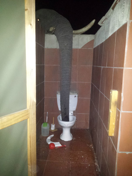 The Elephant In The Bathroom Africa Geographic