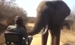 elephant-gets-up-close-and-personal