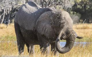 elephant-lelobu-safaris