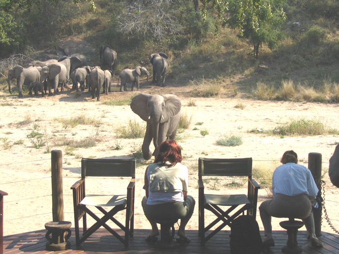 elephants-from-the-deck