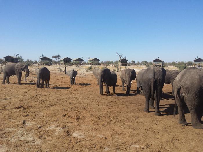 elephants-in-elephant-sands